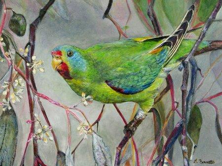 Maureen Bennetts - Swift Parrot